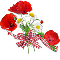 Gifs**Gentils Coquelicots**