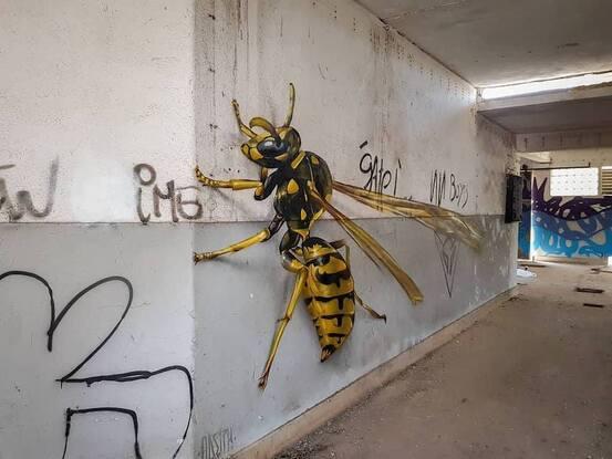 Insectes des rues