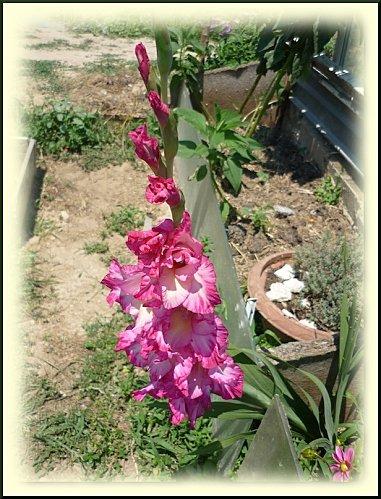fleurs été 2