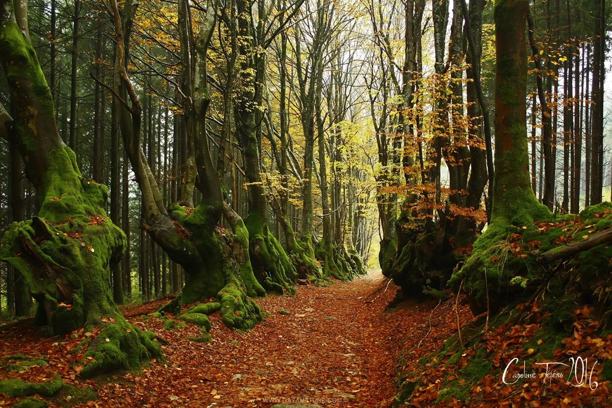 L'allée des Géants ou le chemin des Sorcières, Allier