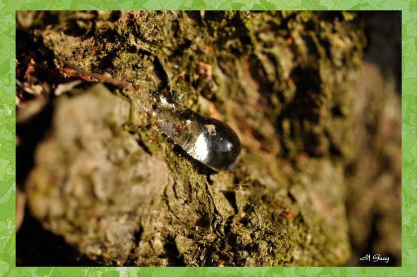 seve-arbre-5515.jpg