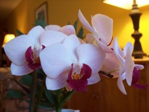 orchidee120212.jpg