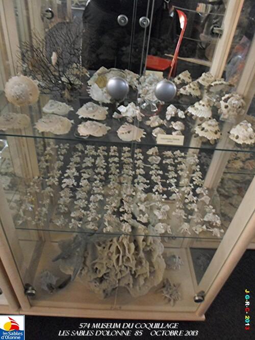MUSEUM DU COQUILLAGES  2/16   vacances 10/ 2013 SABLES D'OLONNE    11/12/2013