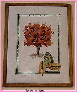 les arbres et leurs fruits amandier-copie-1
