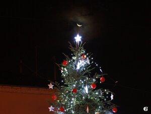 Le sapin et la Lune