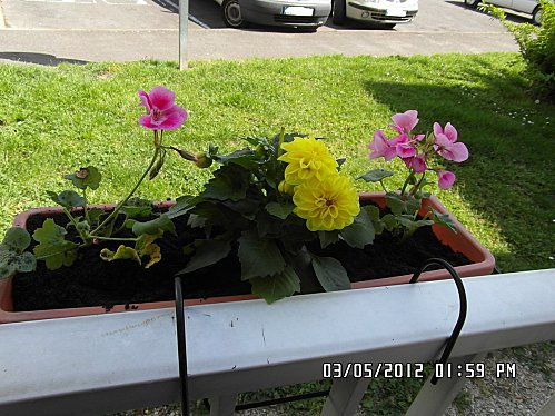 jardinieres-002.JPG