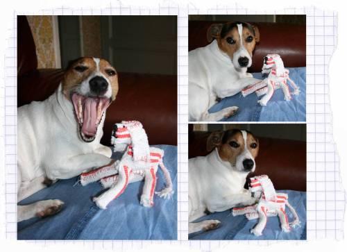 chien serpillère aa r