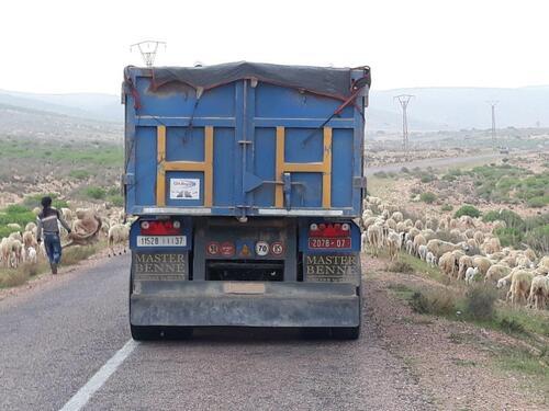 Un beau troupeau qui traverse la route