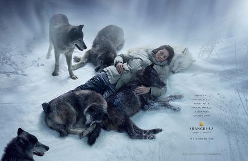 AVEILLAN, Bruno - Shandri-La, It's our nature (Publicités remarquables)