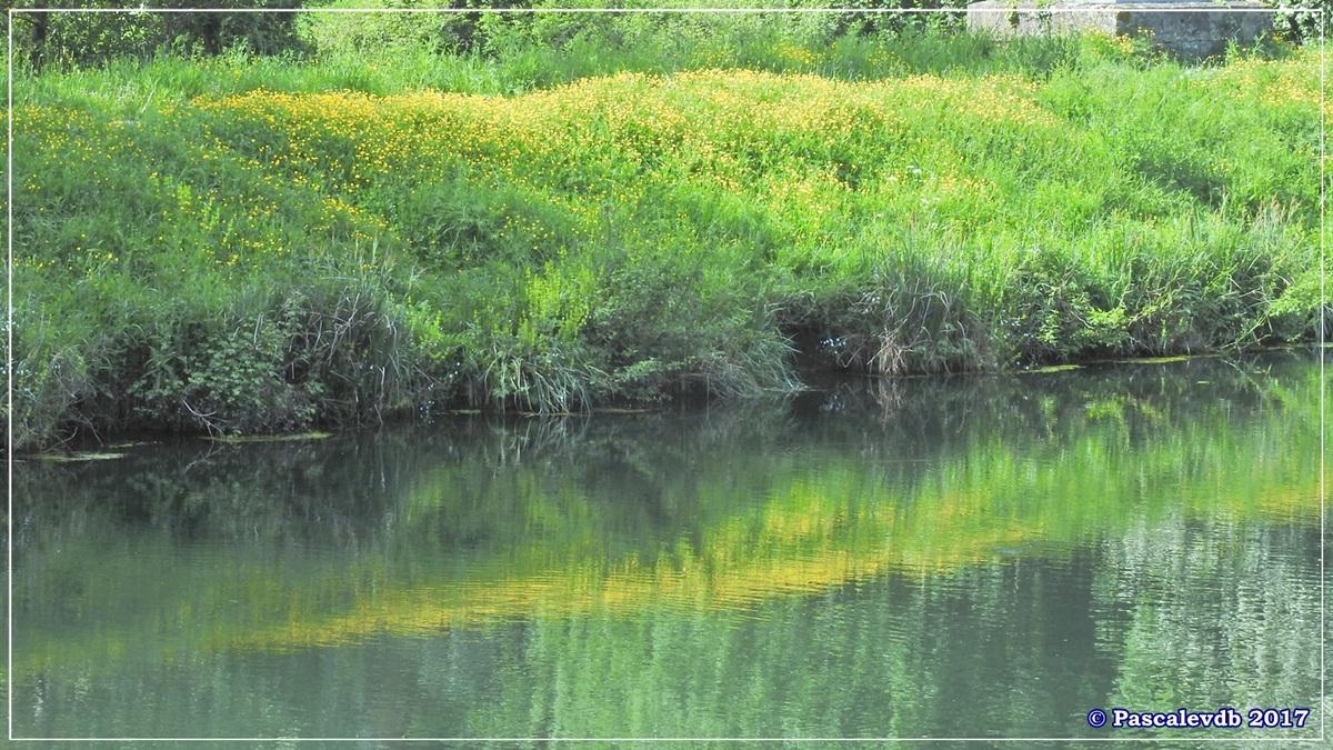 Printemps le long du canal latéral à la Garonne - Avril 2017 - 1/12