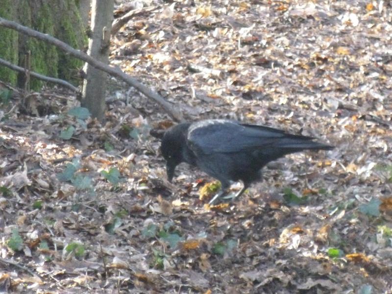 Du noir au rouge histoire d'oiseaux