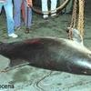 dauphins-morts_2.jpg