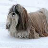Chang dans la neige 028.jpg