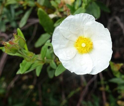 De petites fleurs...