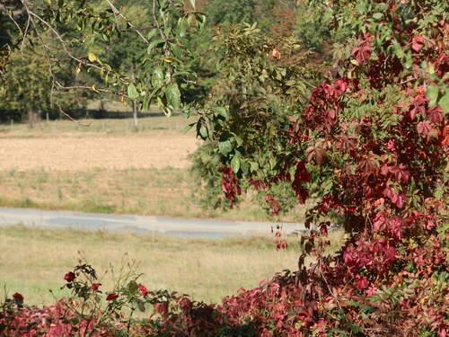 Camaieu d'automne