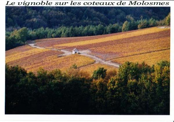 Molosmes Yonne