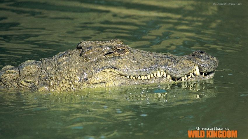 10 images de reptiles