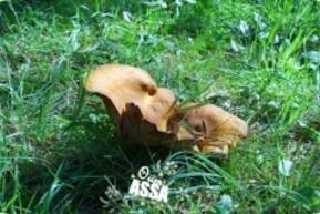 un champignon 3