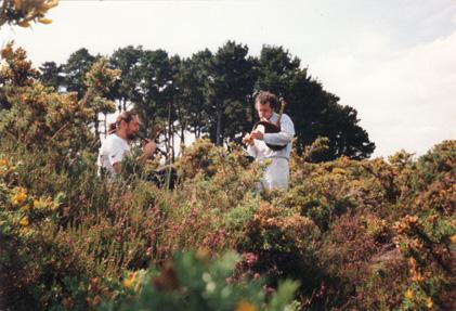 Korrigans sonneurs dans la lande