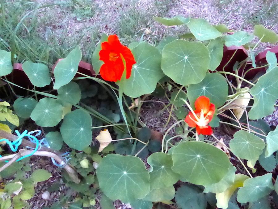 Les dons d'un jardin, le nôtre.