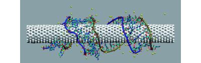 Liaison d'une protéine à un nanotube de carbone