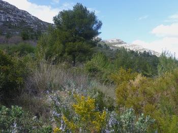 Un dernier regard au Mont du Marseillais