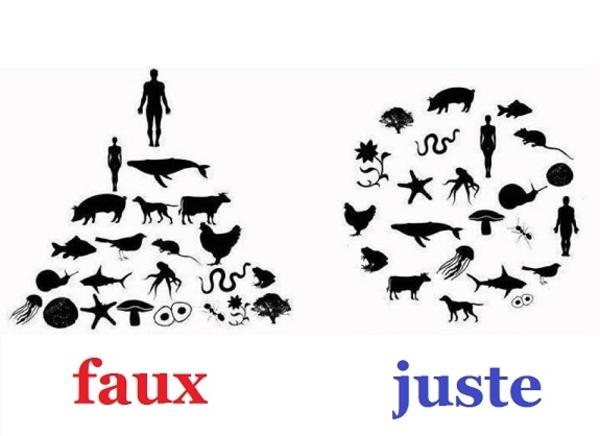 hierarchie_faux_juste