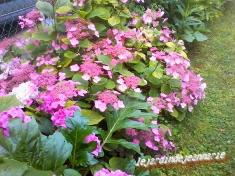 des plantes dans mon jardin