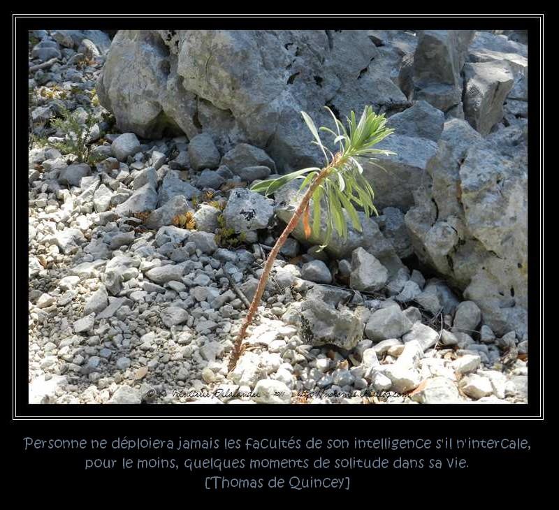 La nature demande bien peu de choses...
