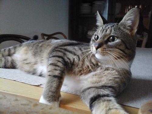 Garde de chat à domicile sur Nantes