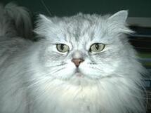 Mon chat Pachou