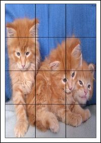 Puzzles animaux 12 cadres