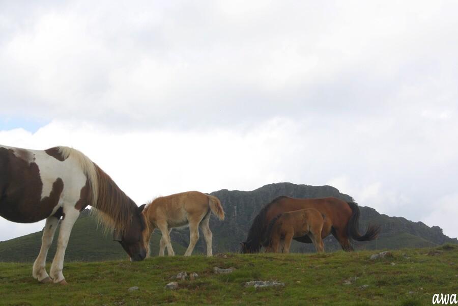 Enfin,les Pottoks de l'élevage d'Unhaia !!!