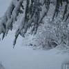 neige jardin 8déc2010 (4).jpg