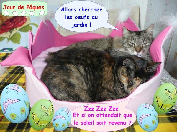 Oeufs de Pâques et chats
