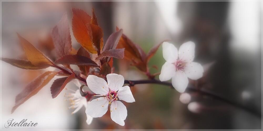 Premier sourire du printemps