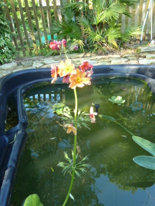 Le bassin !