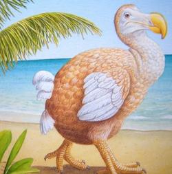 Au pays du Dodo...