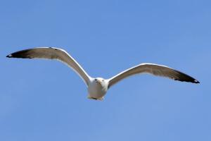 Oiseau en vol-30