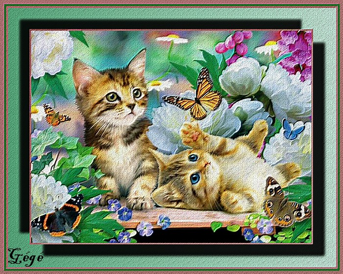 Chatons Papillons....