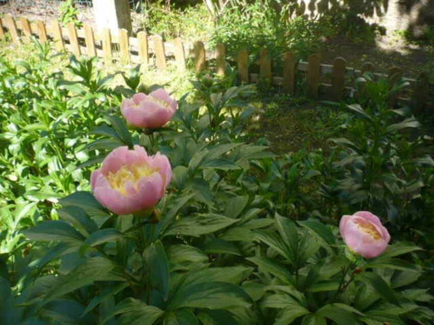 fleurs au pavillon de mémé