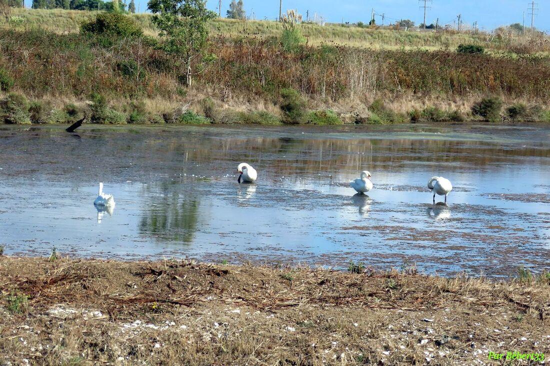 des oiseaux à Oléron