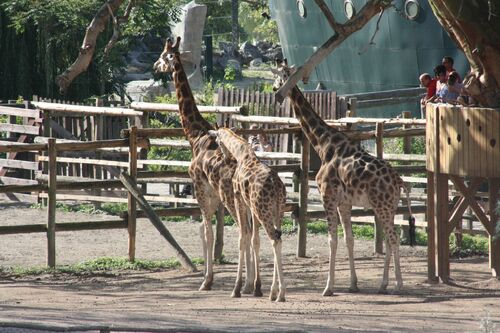 Animaux d' Afrique