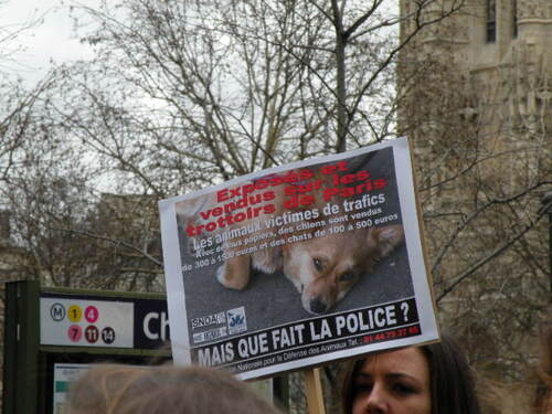 La Cause Animale...