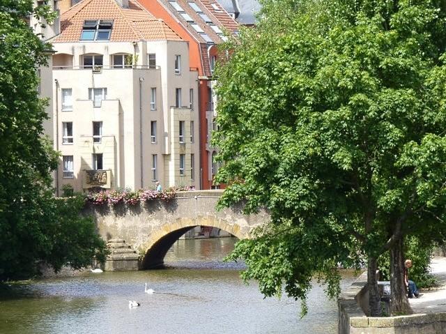 Metz les cygnes de la Moselle 3 été 2010