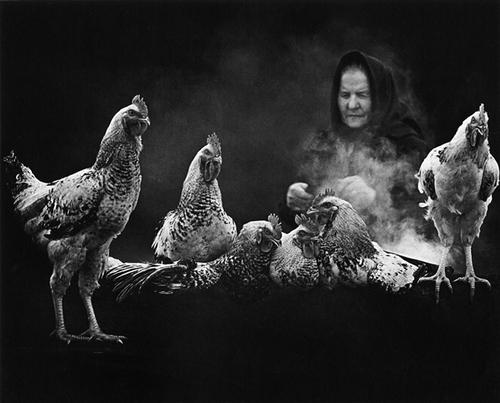 11 - Les poules du monde, suite