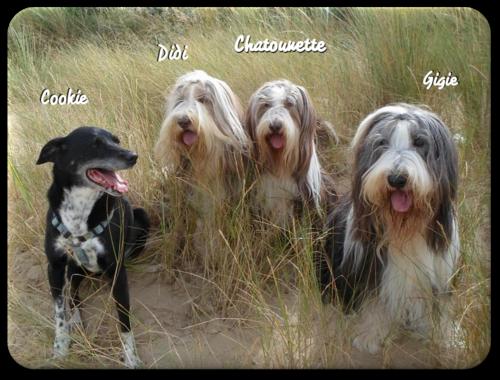 ♥ Chatounette fête ses 12 ans * d' Athos & Cheyenne ♥