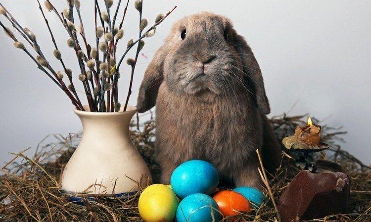 """Résultat de recherche d'images pour """"bonne fête de pâques"""""""