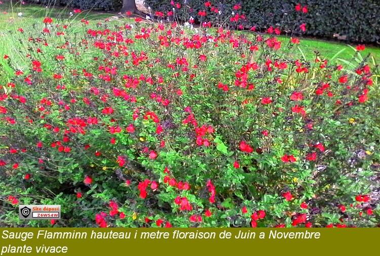reconnaissance des végétaux,la différence entre une plante vivace et une plante annuelle