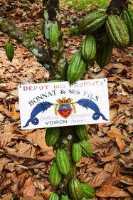 À près de 10 000 kilomètres de Voiron, l'enseigne de la maison Bonnat marque les arbres qui produiront son cru Madre de Dios.